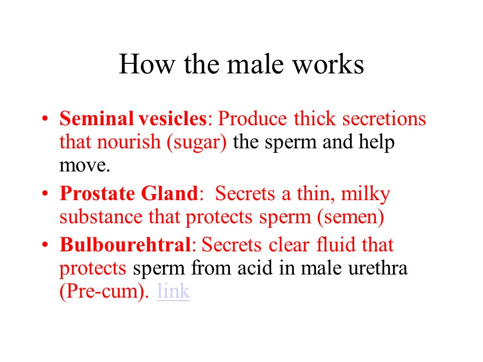How the male Reproductive system works 1.Sperm & urine pass through the urethra 2.Sperm from the testis mature in the epididymis travel through vas deferens.