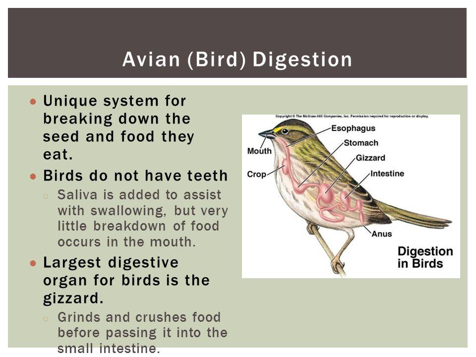 digestive system of birds