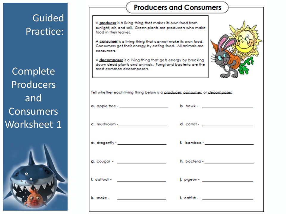 Producers Consumers And Decomposers Worksheet Worksheets for all ...