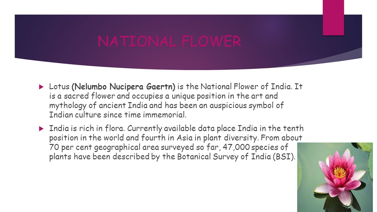 National flower essay