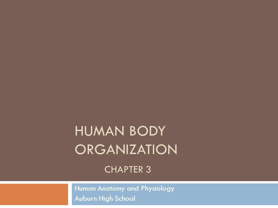 HUMAN BODY ORGANIZATION CHAPTER 3 Human Anatomy and Physiology ...