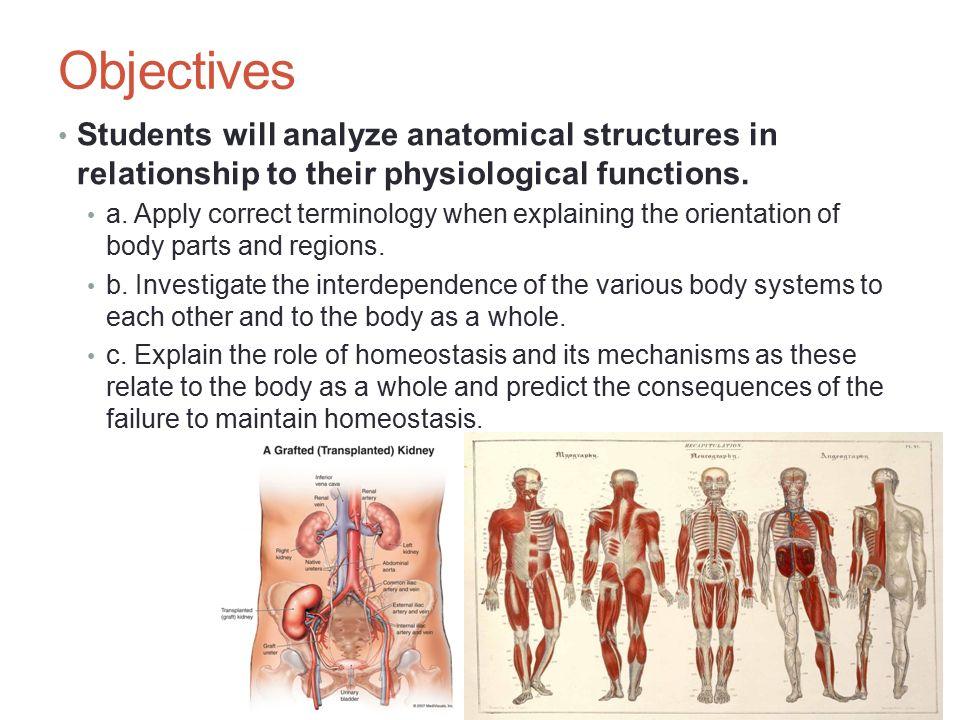 Fantastisch Grundlagen Der Menschlichen Anatomie Und Physiologie 6 ...