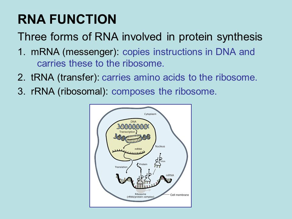 DNA, RNA AND PROTEIN SYNTHESIS. DNA (DEOXYRIBONUCLEIC ACID ...