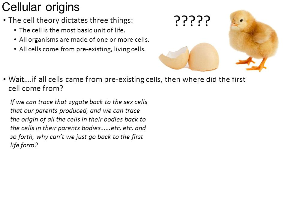 1.5 The origin of cells https://www.youtube.com/watch?v ...