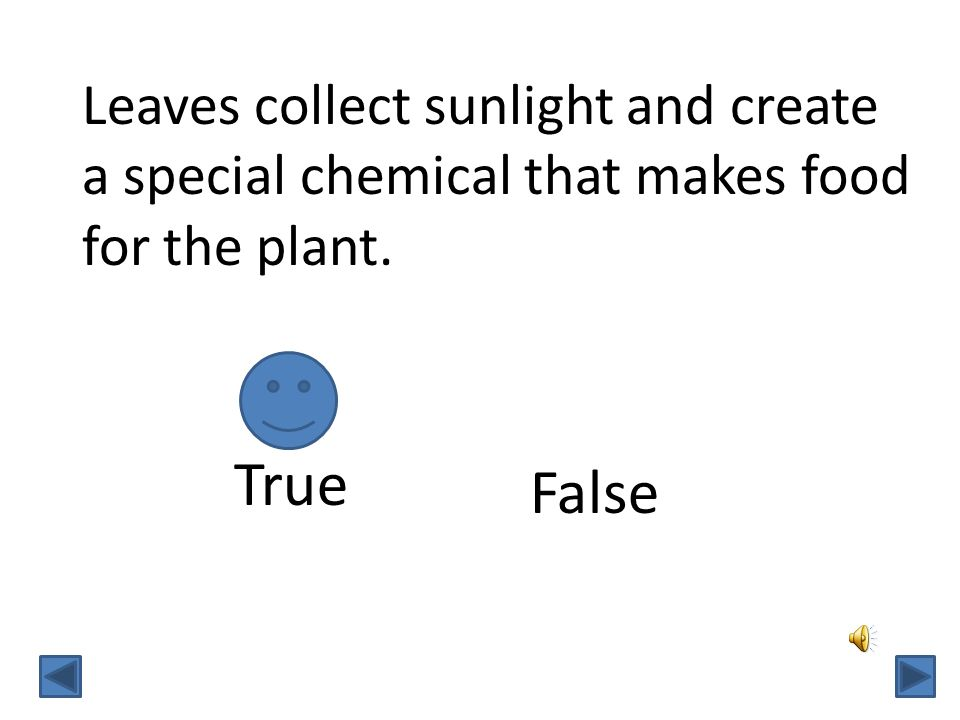 Leaves collect sunlight and create a special chemical that makes food for the plant. TrueFalse