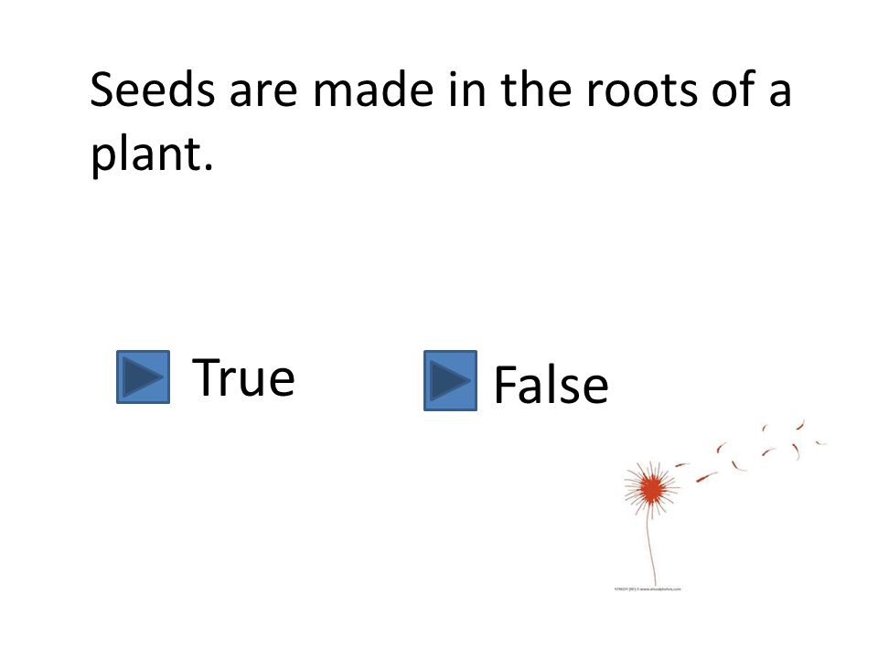 Leaves collect sunlight and create a special chemical that makes food for the plant. True False