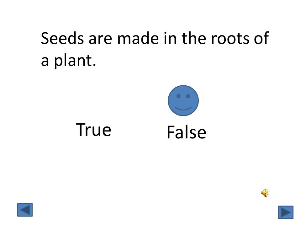 Seeds are made in the roots of a plant. True False