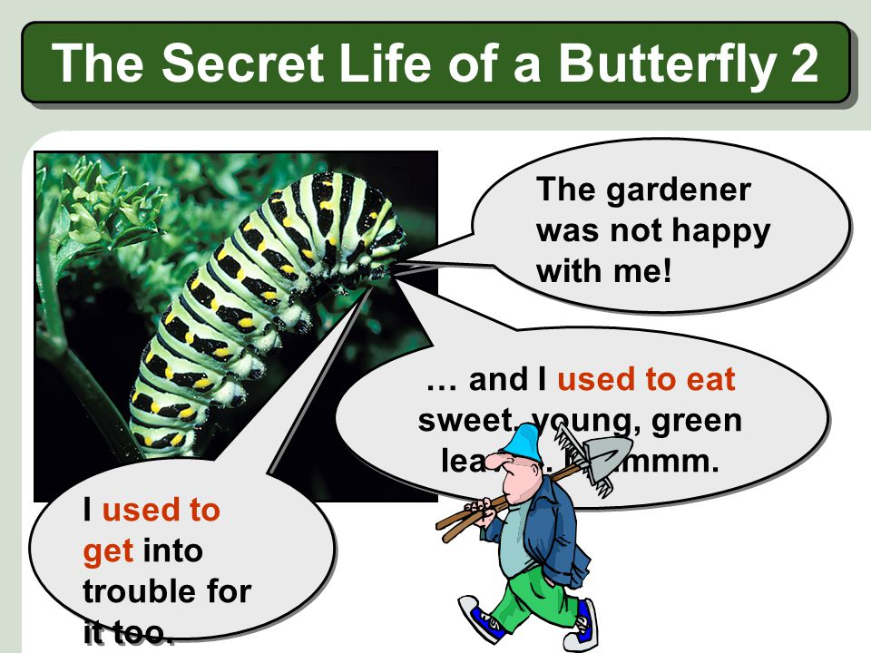 …I used to be a caterpillar! Hello! Hello! I am Madame Butterfly … … and I am beautiful! …I used to look very different! The Secret Life of a Butterfl