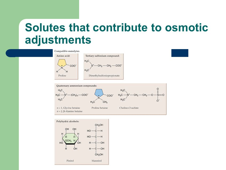 Solutes that contribute to osmotic adjustments