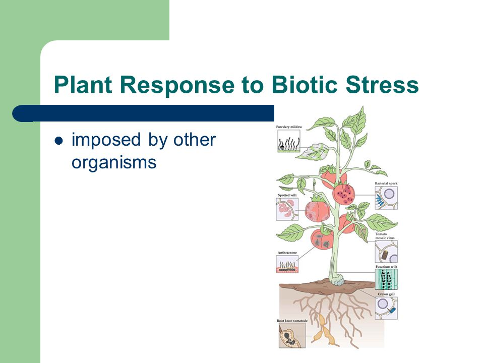 Plant Response to Biotic Stress imposed by other organisms