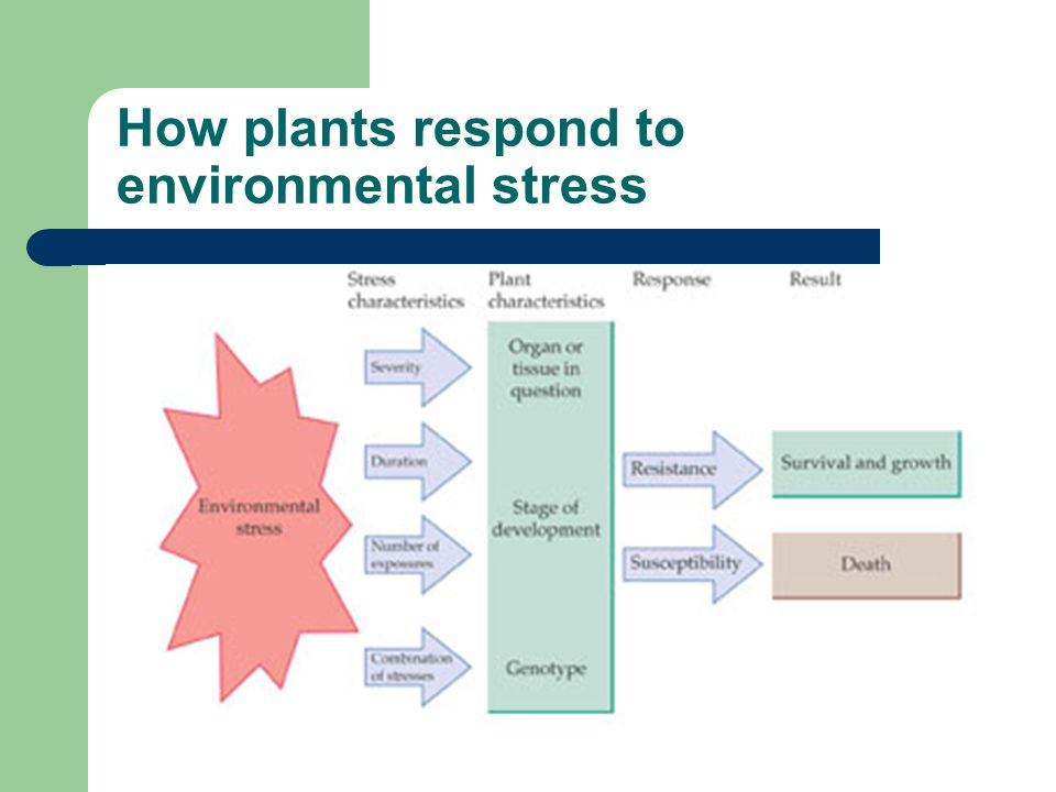 How plants respond to environmental stress