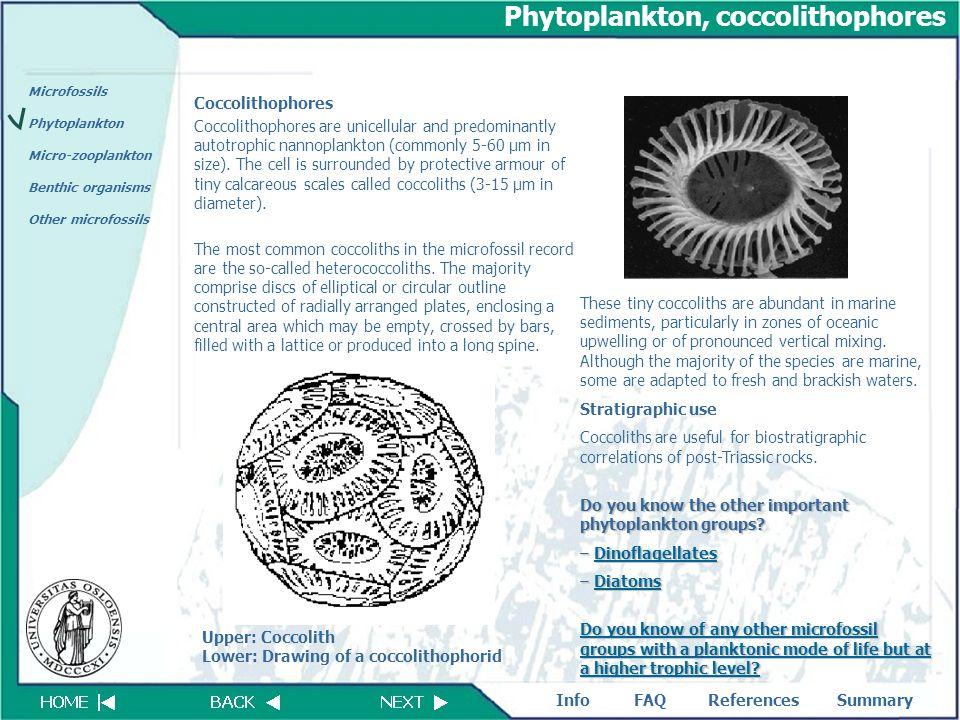 FAQReferencesSummaryInfo Microfossils Phytoplankton Micro-zooplankton Benthic organisms Other microfossils Phytoplankton, coccolithophores Coccolithop