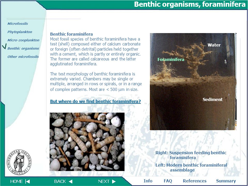 FAQReferencesSummaryInfo Microfossils Phytoplankton Micro-zooplankton Benthic organisms Other microfossils Benthic organisms, foraminifera Benthic for
