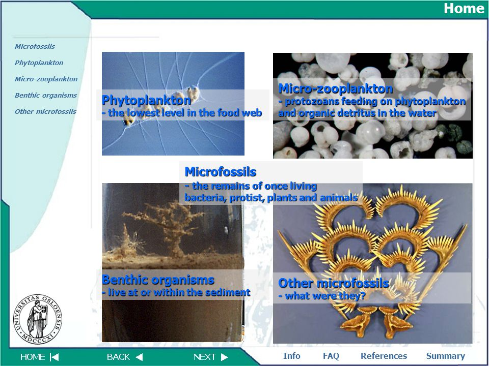 FAQReferencesSummaryInfo Microfossils Phytoplankton Micro-zooplankton Benthic organisms Other microfossils Microfossils - the remains of once living b