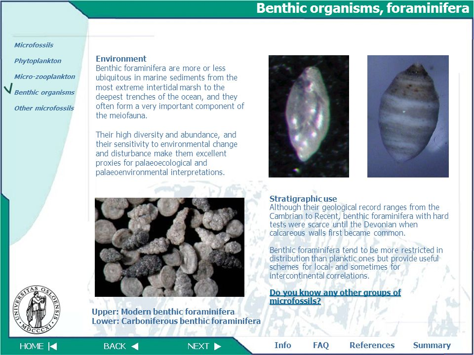 FAQReferencesSummaryInfo Microfossils Phytoplankton Micro-zooplankton Benthic organisms Other microfossils Benthic organisms, foraminifera Environment