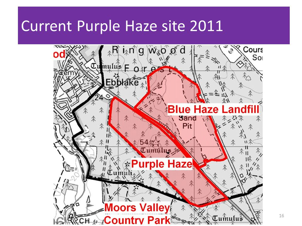 Current Purple Haze site 2011 16