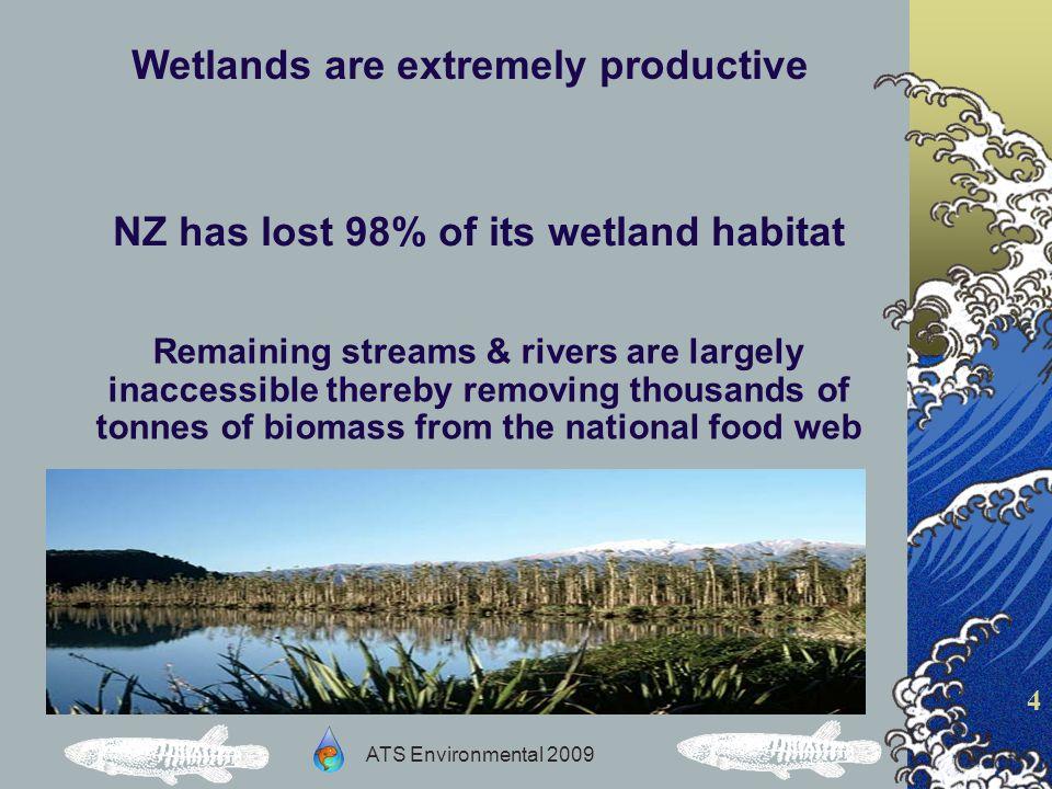 ATS Environmental 2009 5 The decline of New Zealands freshwater wetlands