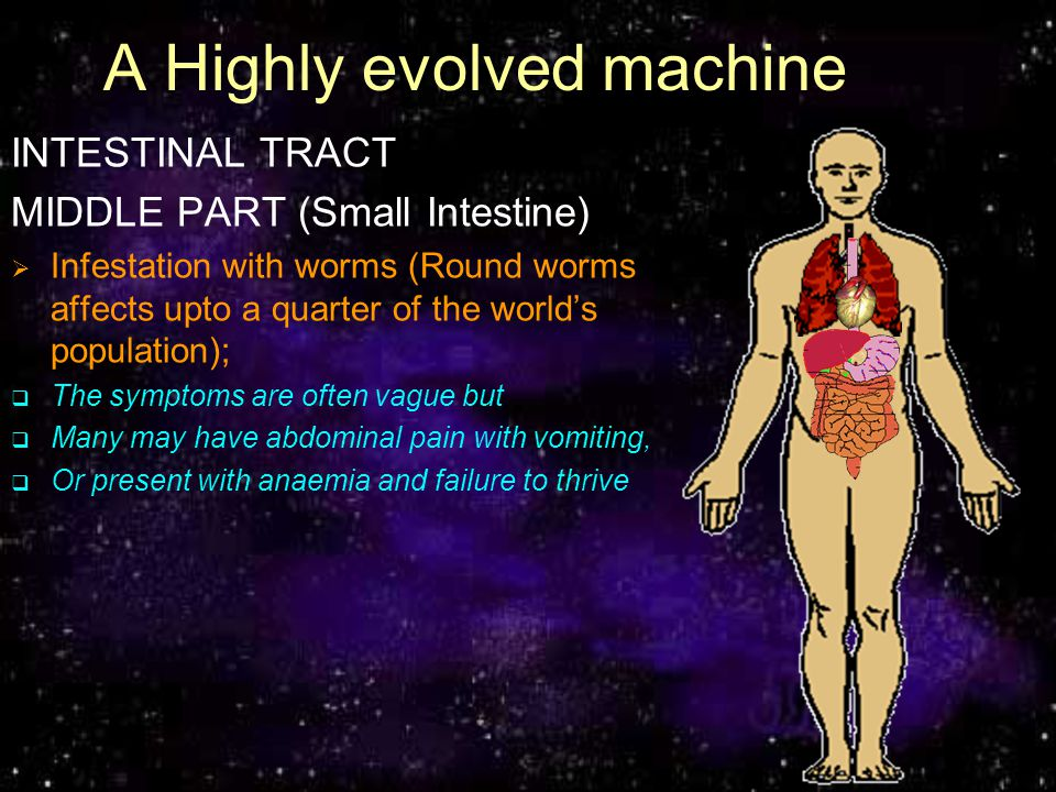 A Highly evolved machine INTESTINAL TRACT MIDDLE PART (Small Intestine) Infestation with worms (Round worms affects upto a quarter of the world popula