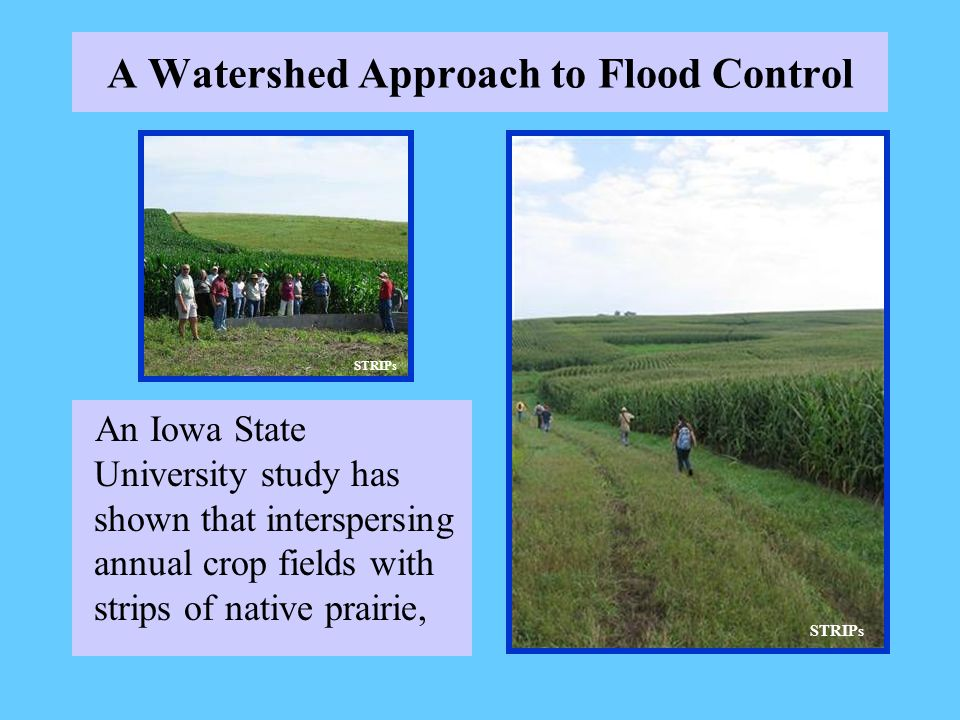 A Watershed Approach to Flood Control An Iowa State University study has shown that interspersing annual crop fields with strips of native prairie, ST