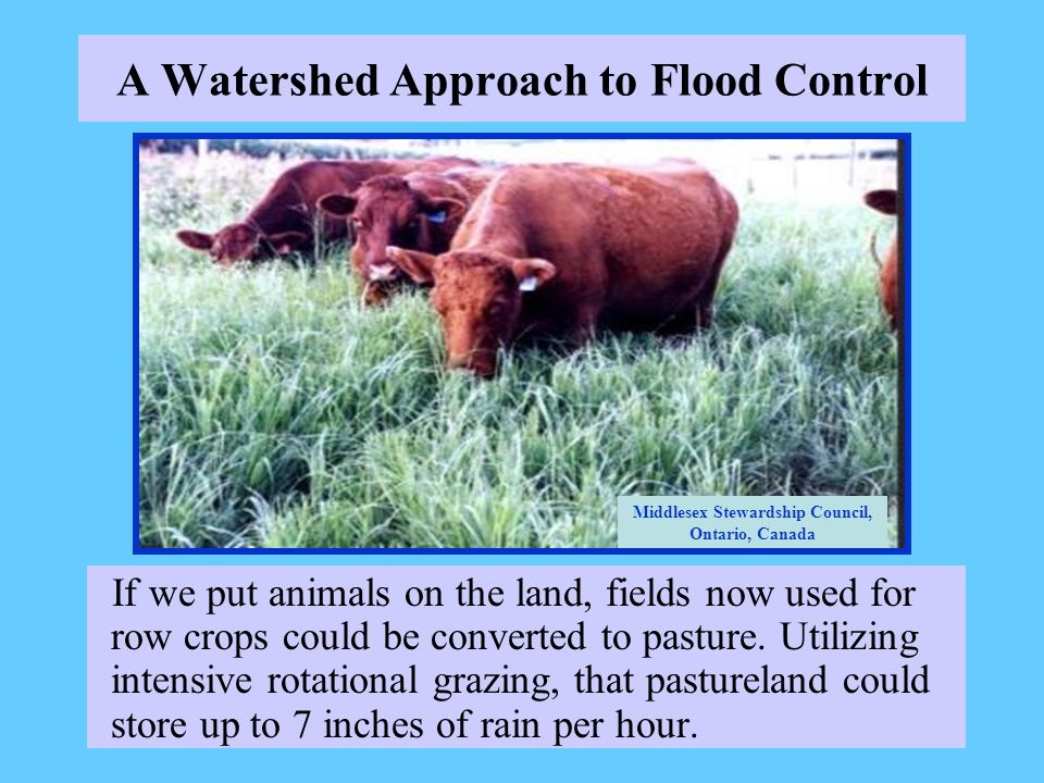 A Watershed Approach to Flood Control If we put animals on the land, fields now used for row crops could be converted to pasture.