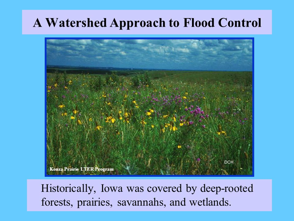 A Watershed Approach to Flood Control Historically, Iowa was covered by deep-rooted forests, prairies, savannahs, and wetlands.