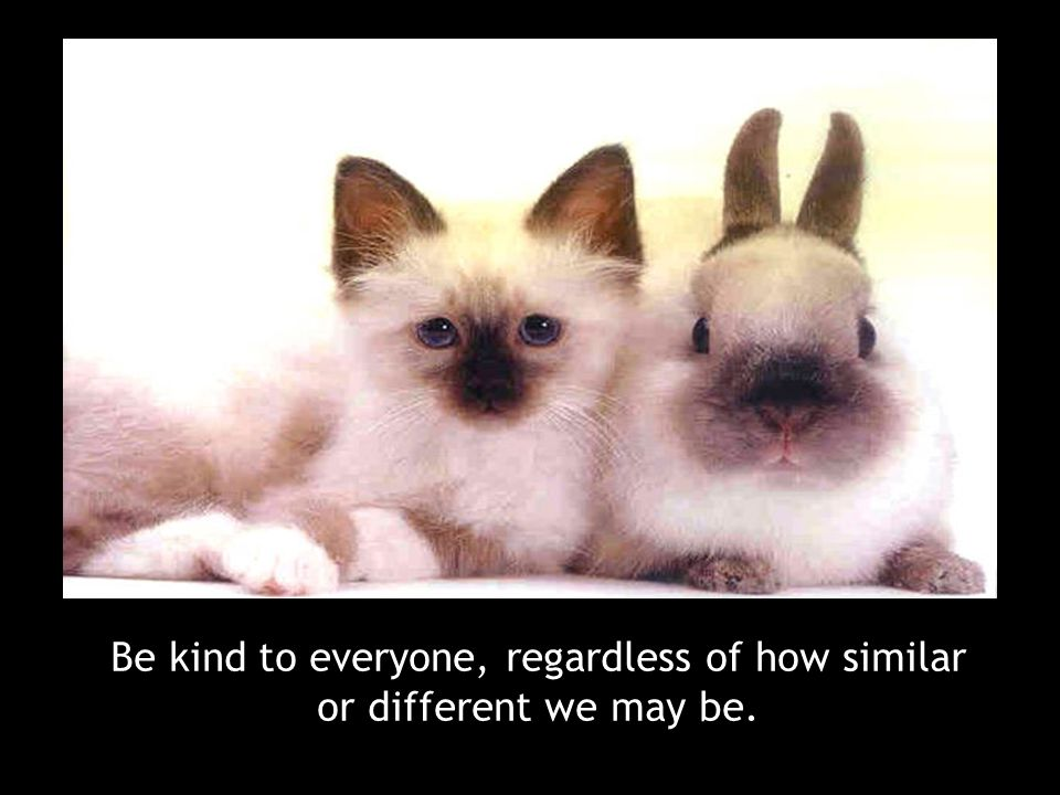 Be kind to everyone, regardless of how similar or different we may be.