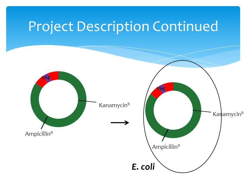 Project Description Continued Kanamycin R Ampicillin R Kanamycin R Ampicillin R E. coli