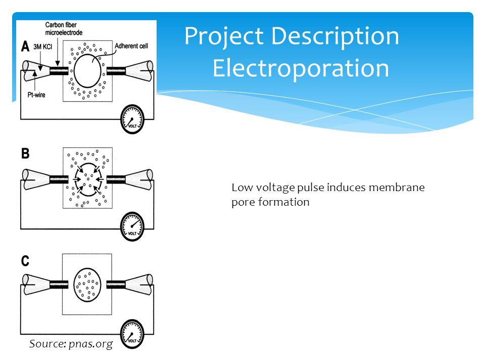 Project Description Electroporation Source: pnas.org Low voltage pulse induces membrane pore formation