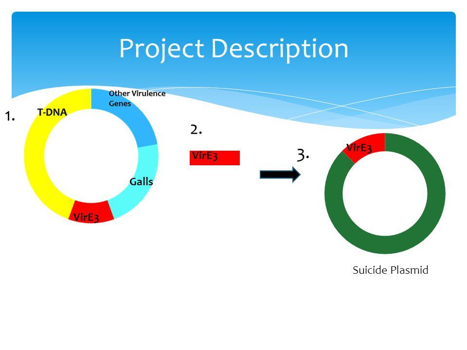 Project Description VirE3 Galls 1. 2. VirE3 Suicide Plasmid 3.