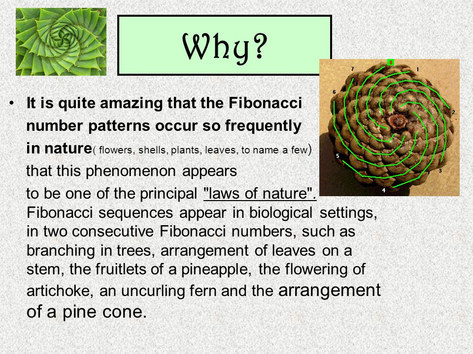 It is quite amazing that the Fibonacci number patterns occur so frequently in nature ( flowers, shells, plants, leaves, to name a few ) that this phen