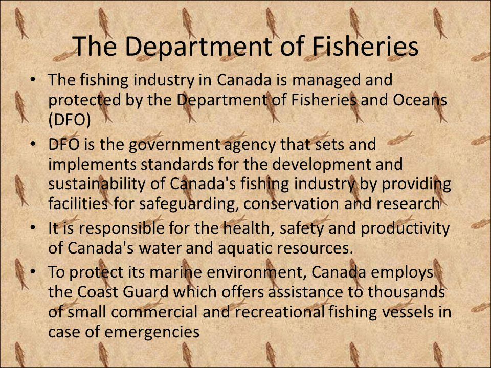 The Department of Fisheries The fishing industry in Canada is managed and protected by the Department of Fisheries and Oceans (DFO) DFO is the governm