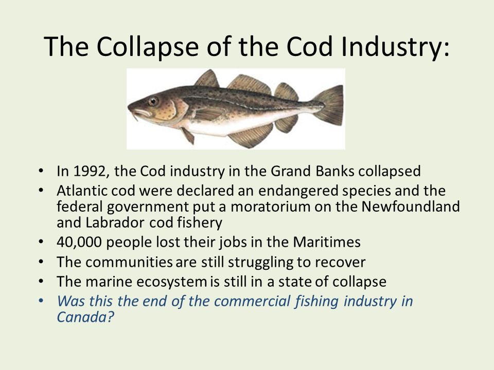 The Collapse of the Cod Industry: In 1992, the Cod industry in the Grand Banks collapsed Atlantic cod were declared an endangered species and the fede