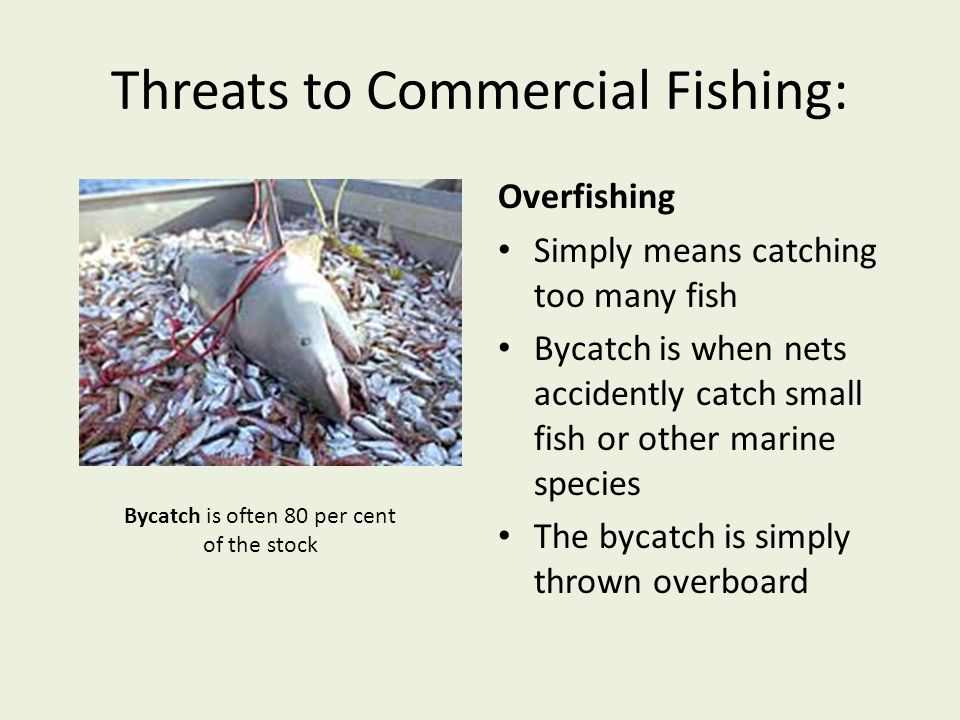 Threats to Commercial Fishing: Overfishing Simply means catching too many fish Bycatch is when nets accidently catch small fish or other marine specie