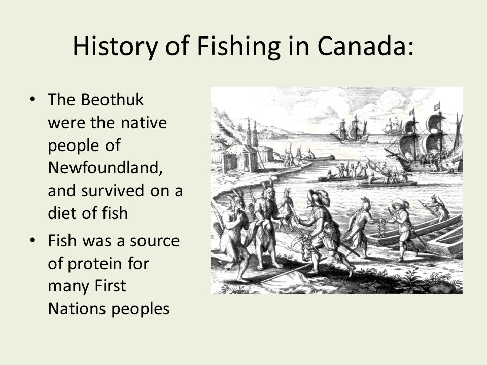 History of Fishing in Canada: The Beothuk were the native people of Newfoundland, and survived on a diet of fish Fish was a source of protein for many