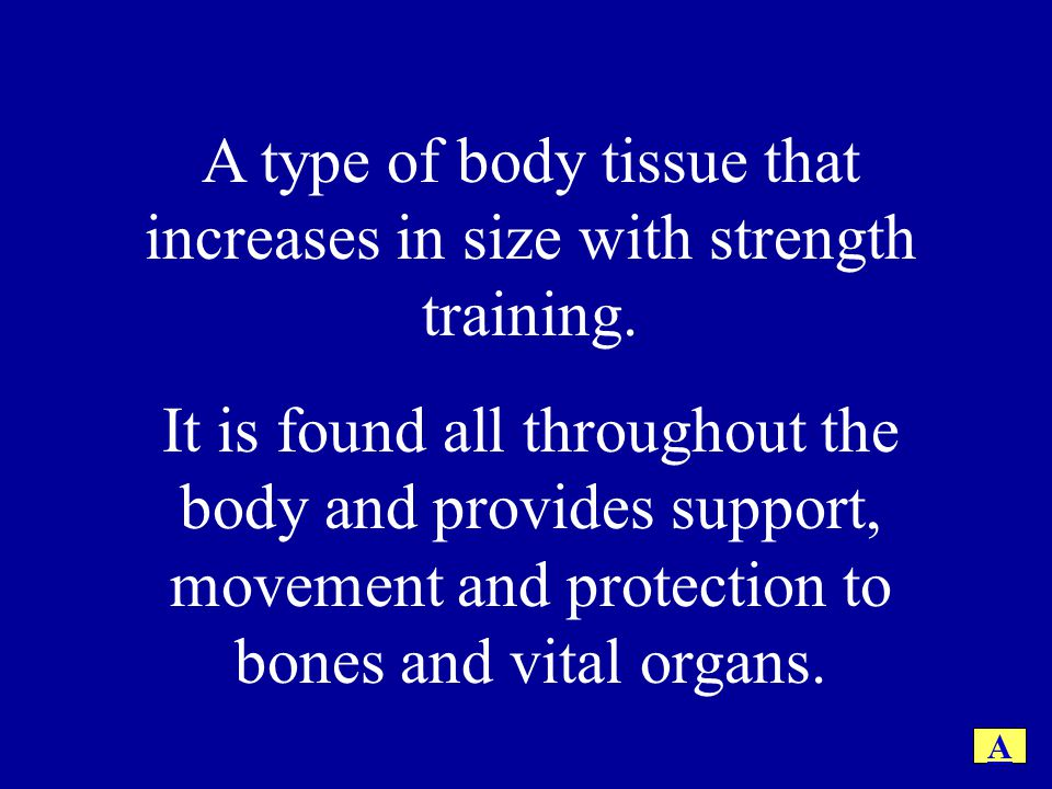 A type of body tissue that increases in size with strength training. It is found all throughout the body and provides support, movement and protection