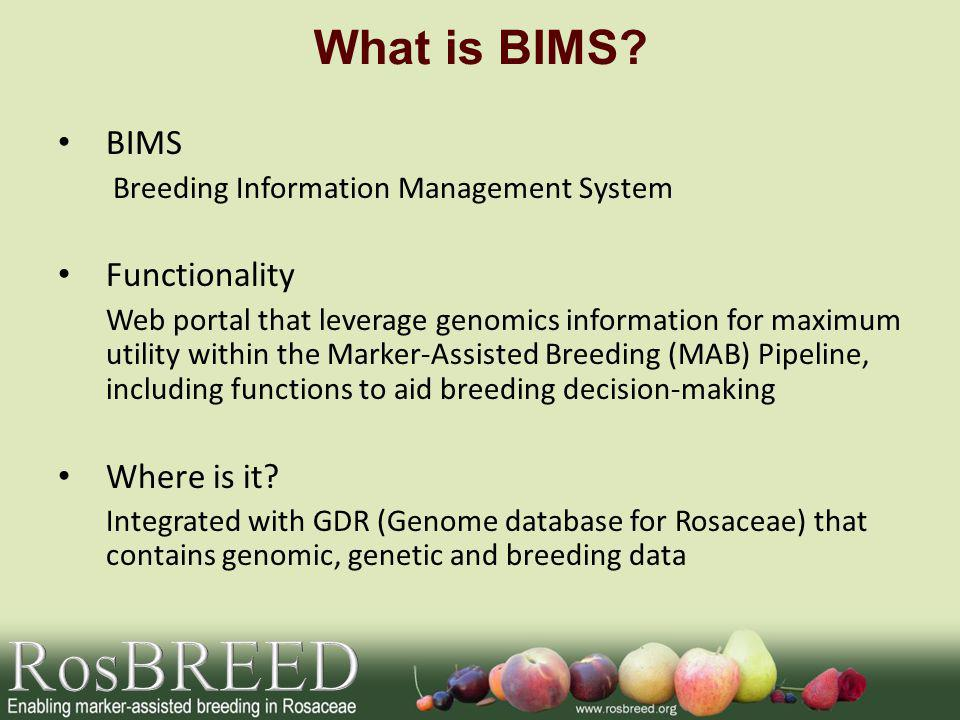 What is BIMS.