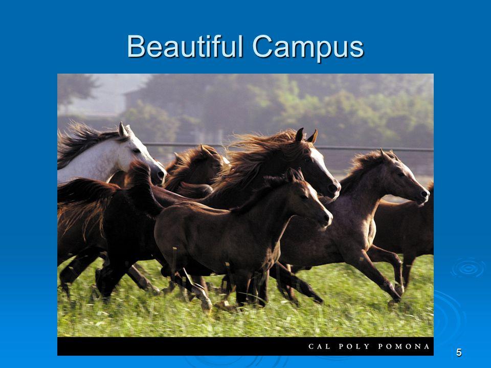 5 Beautiful Campus