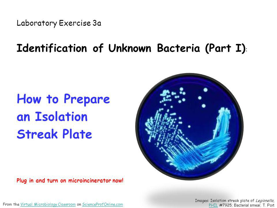 unknown bacteria 9