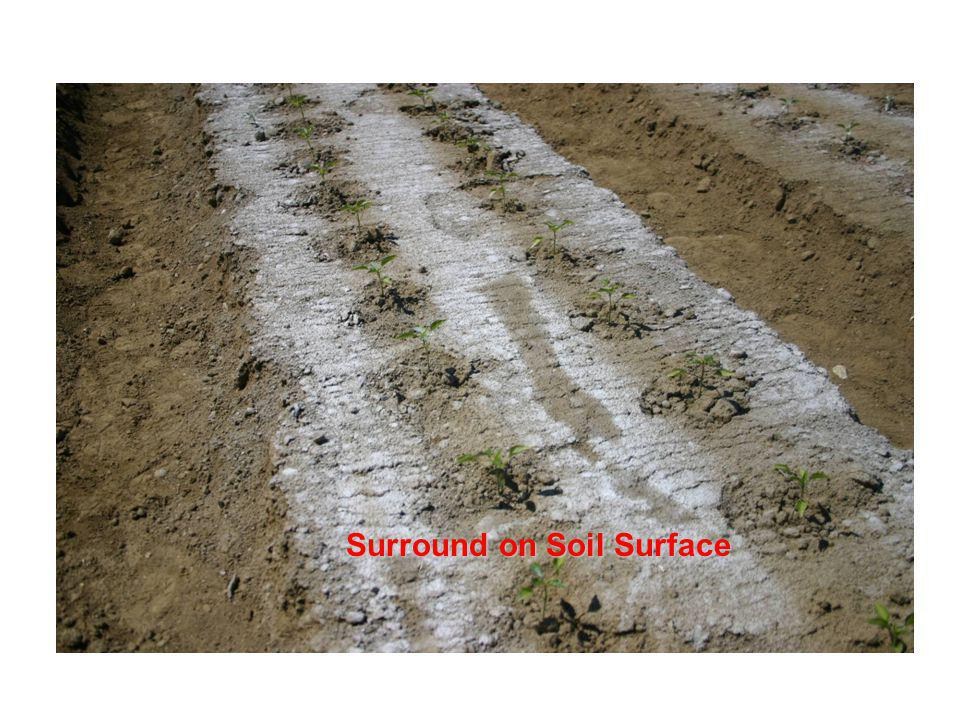 Surround on Soil Surface