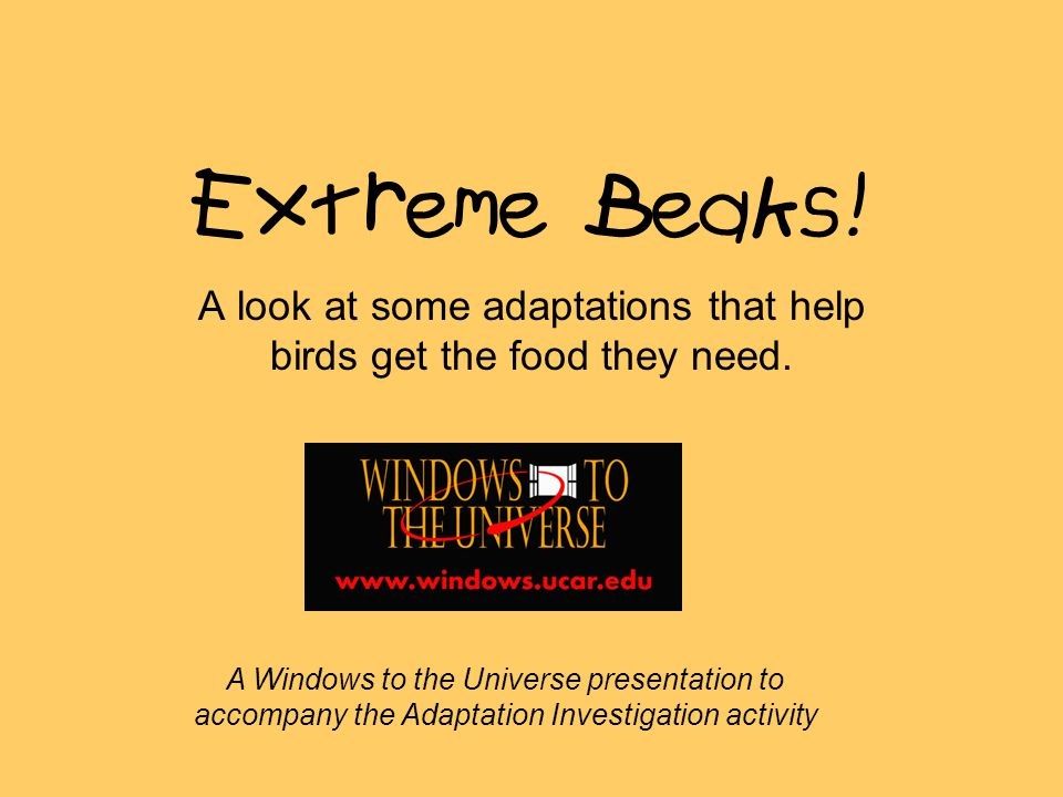 Extreme Beaks. A look at some adaptations that help birds get the food they need.