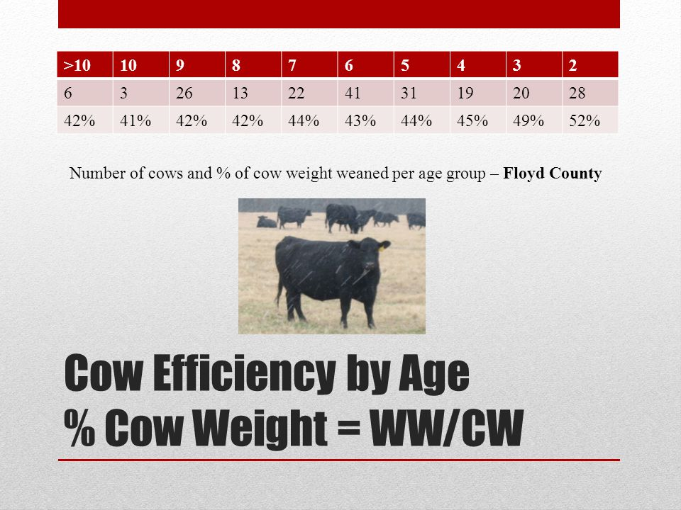 Cow Efficiency by Age % Cow Weight = WW/CW >101098765432 632613224131192028 42%41%42% 44%43%44%45%49%52% Number of cows and % of cow weight weaned per