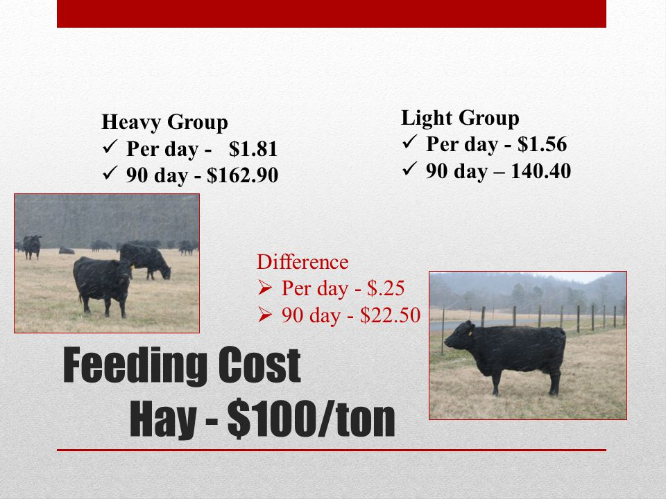 Feeding Cost Hay - $100/ton Heavy Group Per day - $1.81 90 day - $162.90 Light Group Per day - $1.56 90 day – 140.40 Difference Per day - $.25 90 day - $22.50