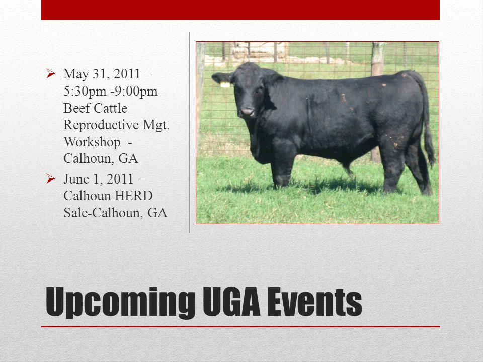 Upcoming UGA Events May 31, 2011 – 5:30pm -9:00pm Beef Cattle Reproductive Mgt. Workshop - Calhoun, GA June 1, 2011 – Calhoun HERD Sale-Calhoun, GA