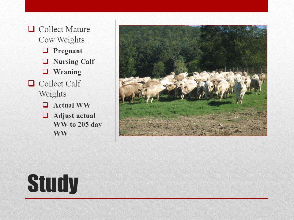 Survey Results NW Georgia Cattlemen 1.1079 lbs.