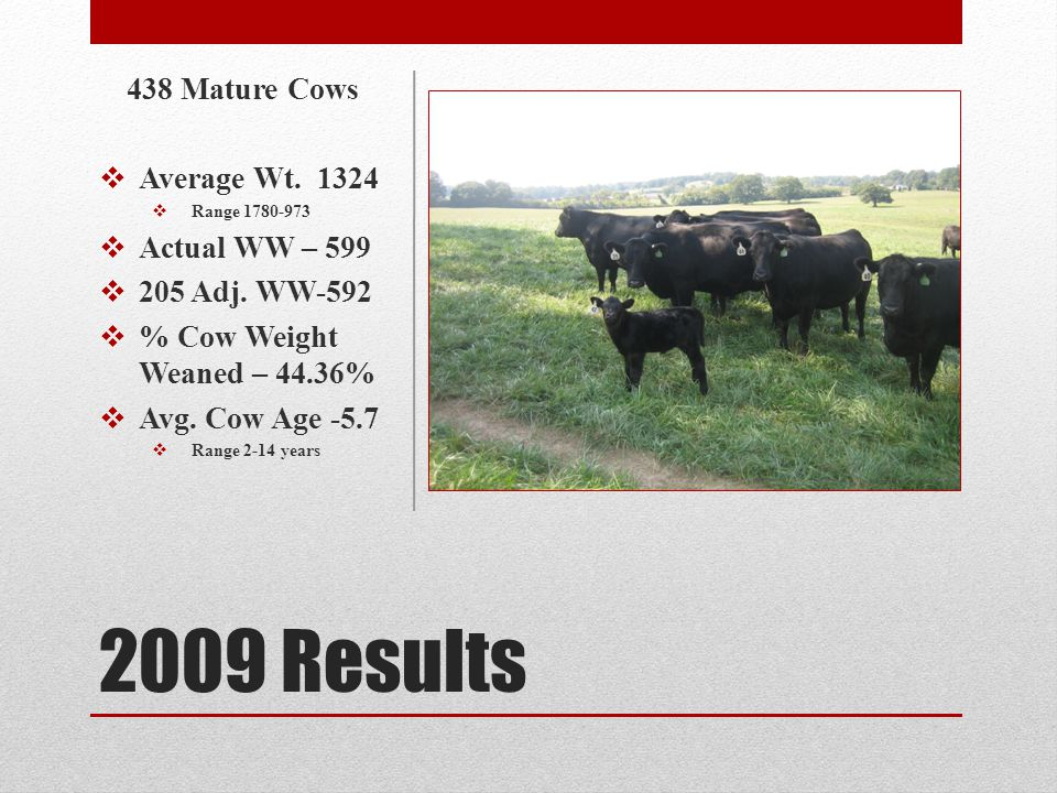 2010 Results 417 Mature Cows Average Wt.1318 Range 1686-962 Actual WW-490 205 Adj.