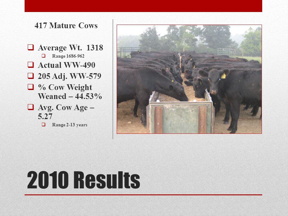 Survey Questions 1.What is the idea mature cow size.