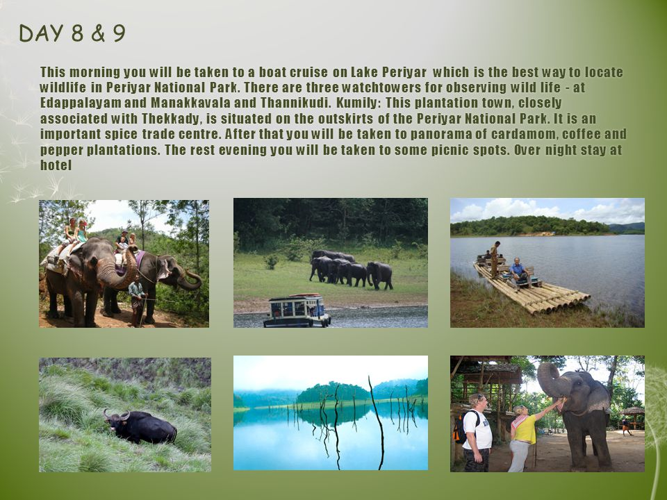 This morning you will be taken to a boat cruise on Lake Periyar which is the best way to locate wildlife in Periyar National Park.