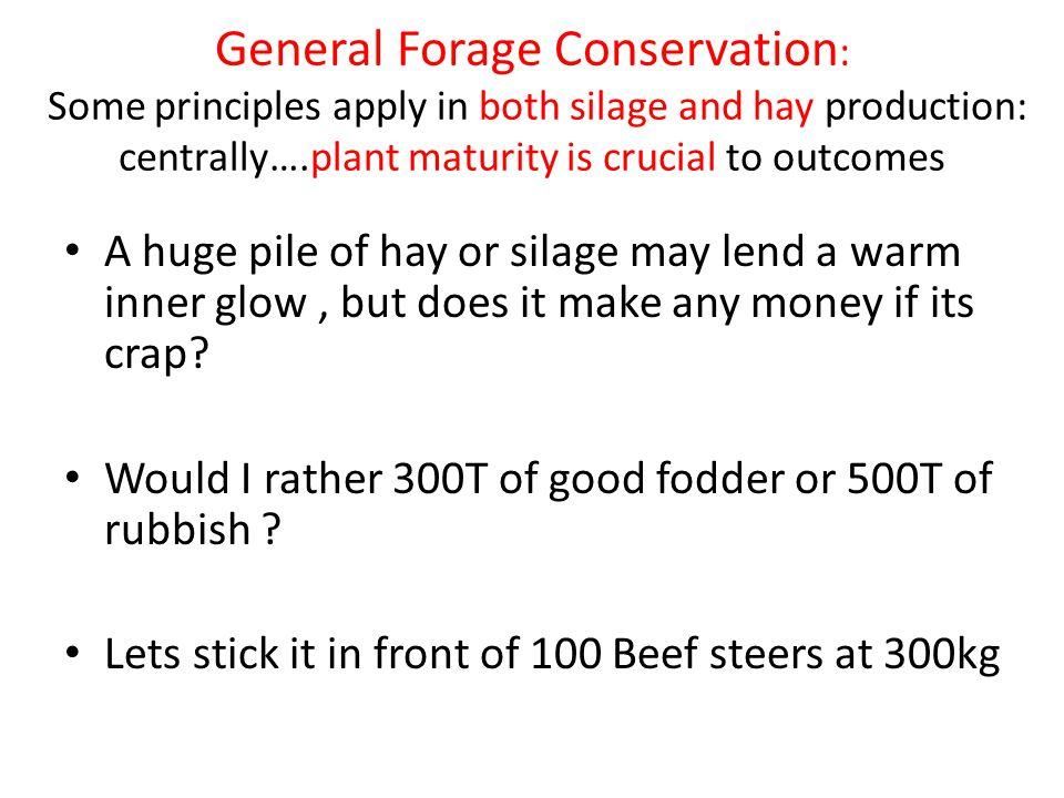 General Forage Conservation : Some principles apply in both silage and hay production: centrally….plant maturity is crucial to outcomes A huge pile of