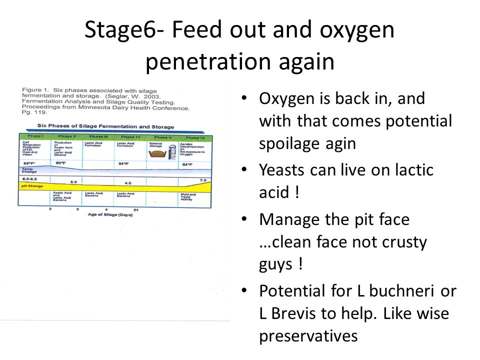 Stage6- Feed out and oxygen penetration again Oxygen is back in, and with that comes potential spoilage agin Yeasts can live on lactic acid ! Manage t