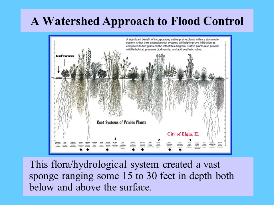A Watershed Approach to Flood Control This flora/hydrological system created a vast sponge ranging some 15 to 30 feet in depth both below and above the surface.